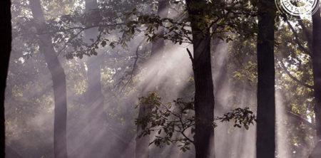 Nebel-Haze-Festival